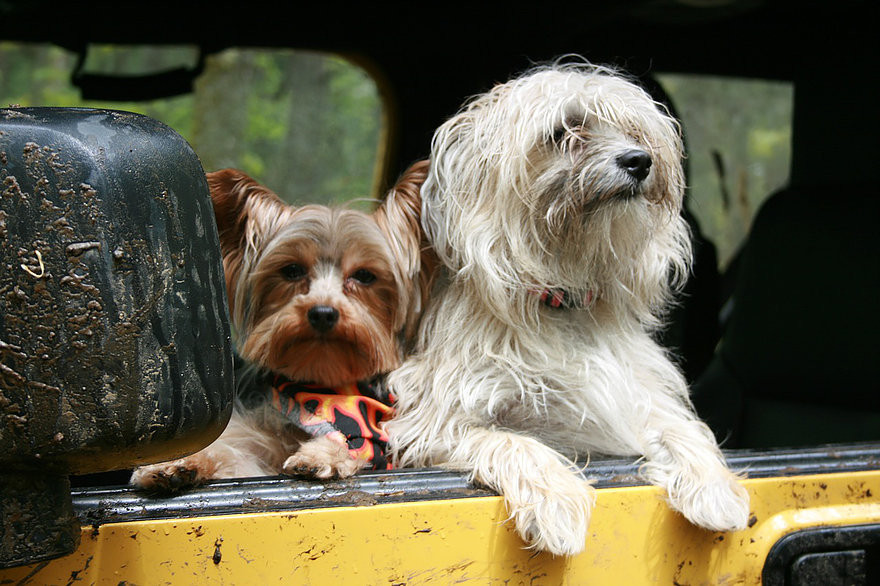 Safe Traveling with Your Dog | Professional Pet Sitters, Inc. | Chicago