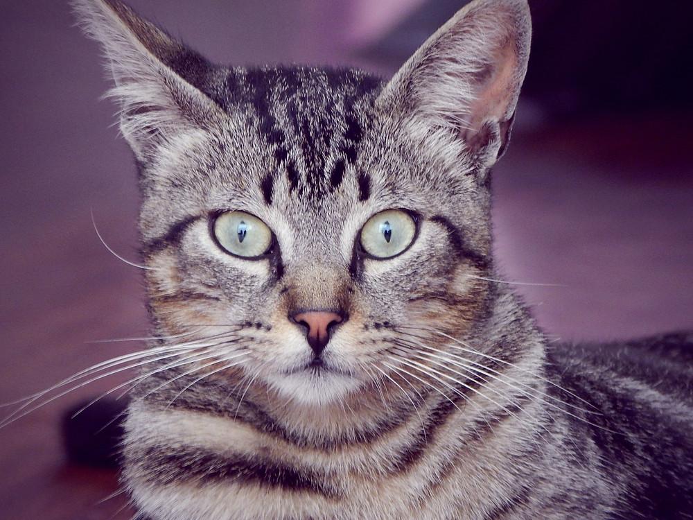 cat-633073_1280.jpg