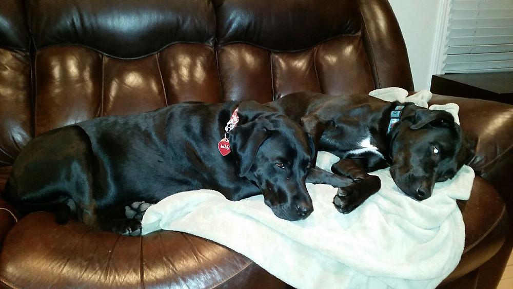 Dog Arthritis | Professional Pet Sitters, Inc. | Chicago