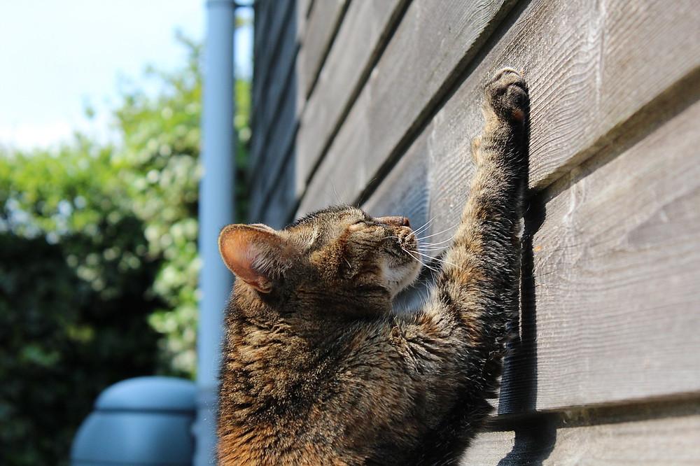 cat-750259_1280.jpg
