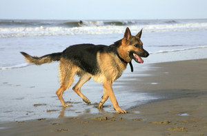 TIPS TO PROTECT YOUR DOG FROM THE SUMMER HEAT | Professional Pet Sitters, Inc. | Chicago