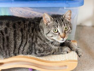 June Cat Rescue: Slim Jim Phantom
