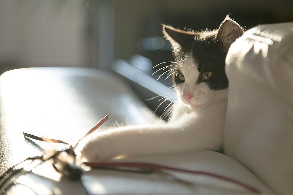 cat-716559_1280.jpg