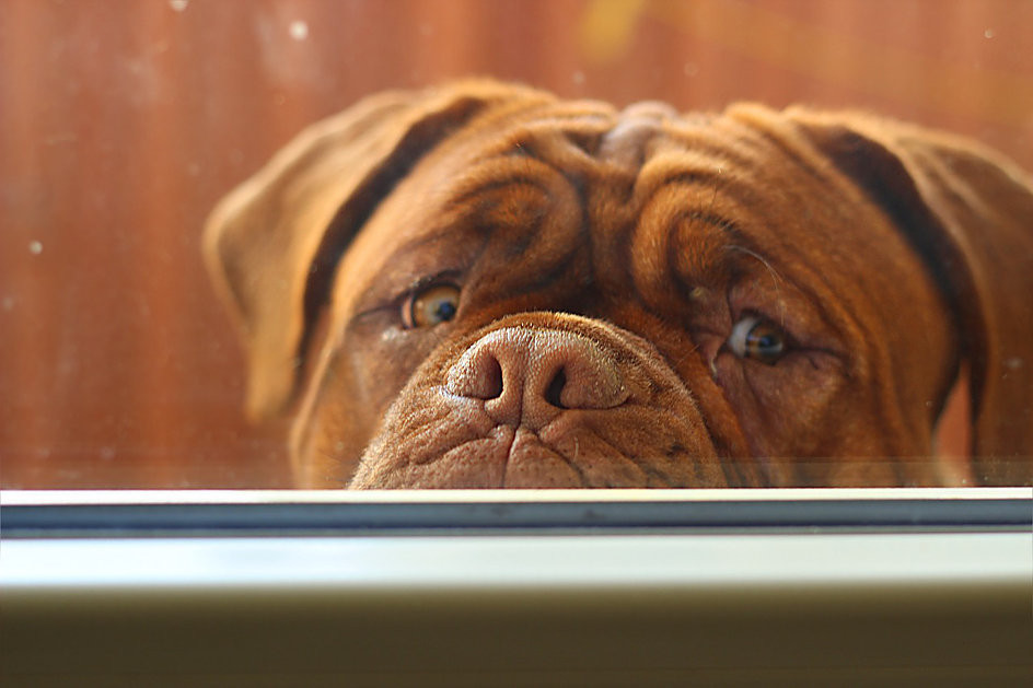 Is Your Dog Afraid of Storms? | Professional Pet Sitters, Inc. | Chicago