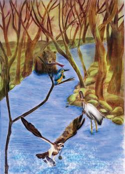 animales rio CMYK