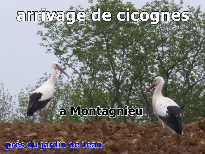 Les cigognes sont arrivées a Montagnieu