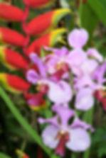 Landscape & Flowers (5).jpg