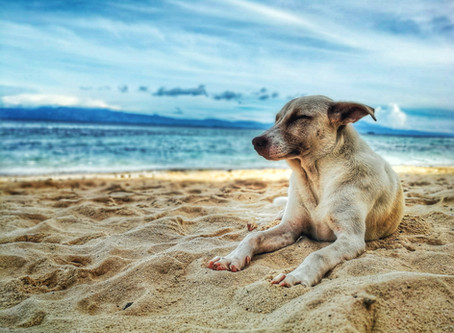 La clé pour voyager avec votre animal...vous renseignez d'avance!