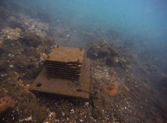 arrecife-la-perla-del-golfo-183238