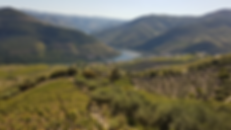 Landscape taked from farm vineyard Douro