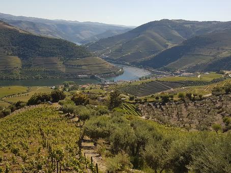 The beauty at north of Portugal Oporto city . Enjoy one tour to Douro Terraces and douro vineyards