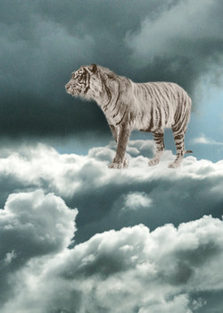 CENERINI Cessation (Java Tiger) 2014.jpg