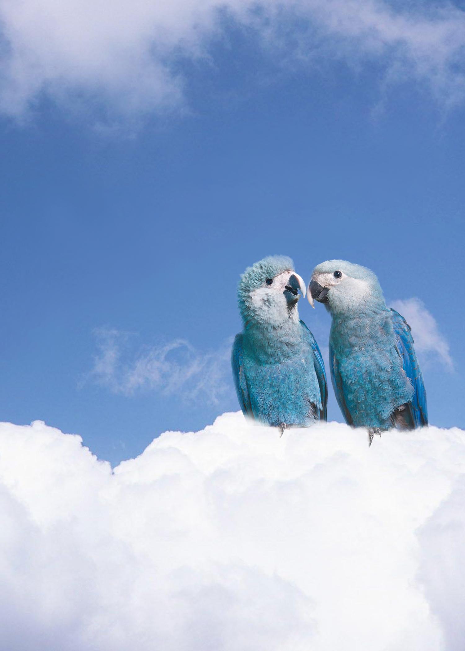 CENERINI Cessation (Spix's Macaw) 2014.j