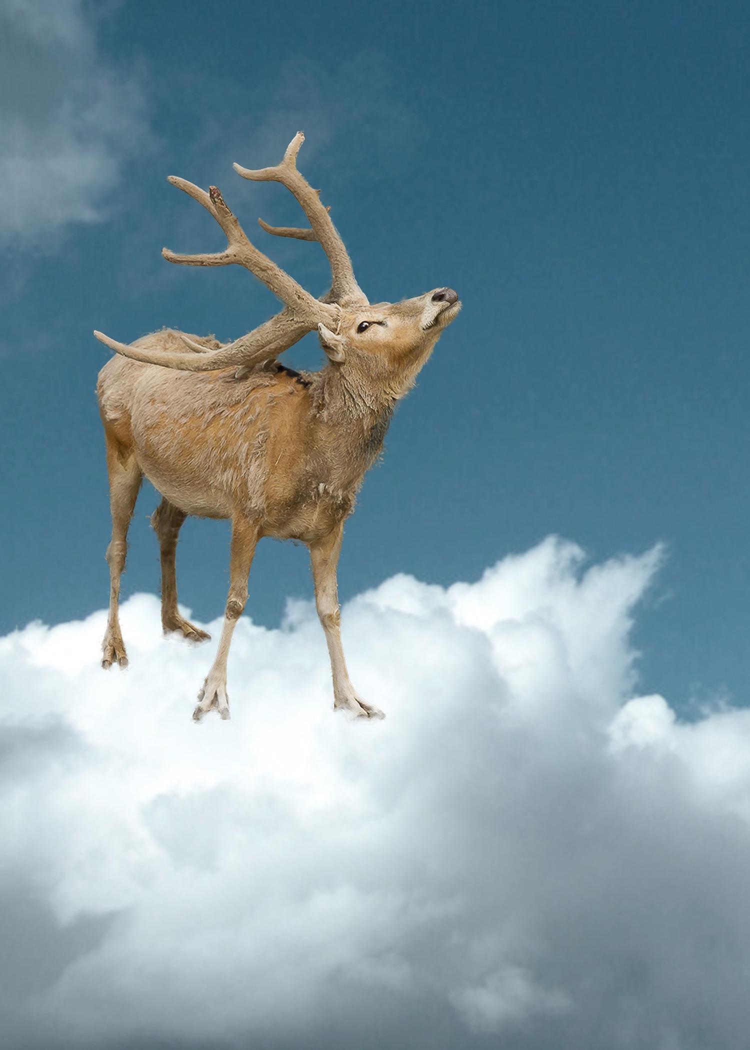 CENERINI_Cessation_(Père_David's_Deer)