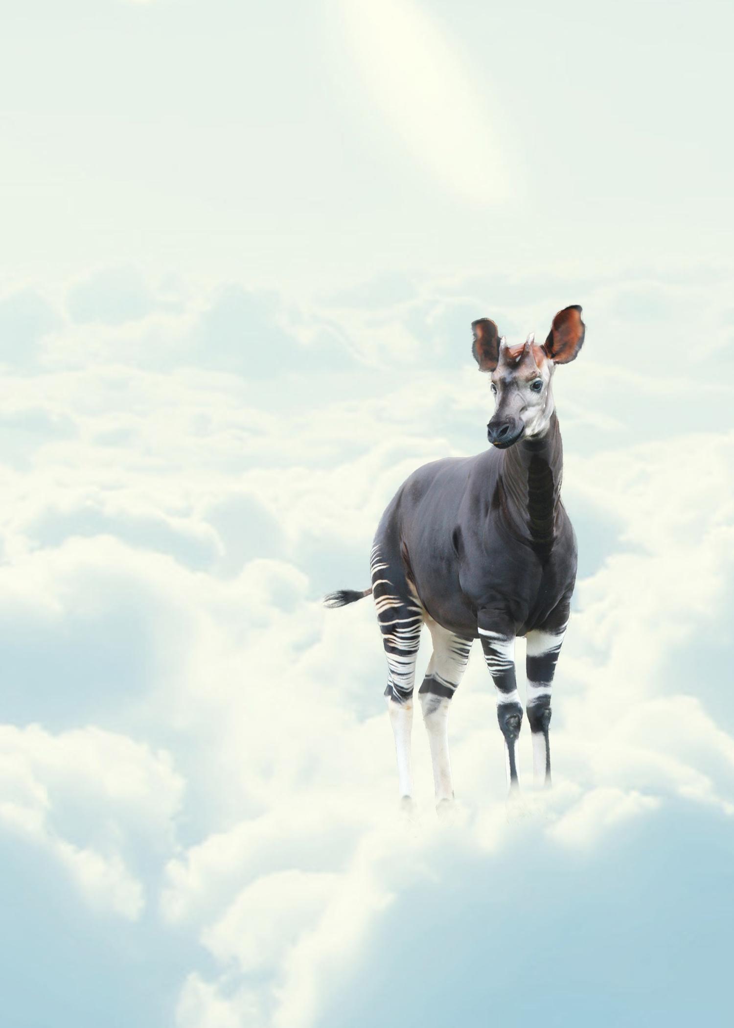 CENERINI Cessation (Okapi) 2015.jpg