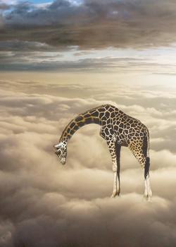 CENERINI Cessation (Baringo Giraffe) 201