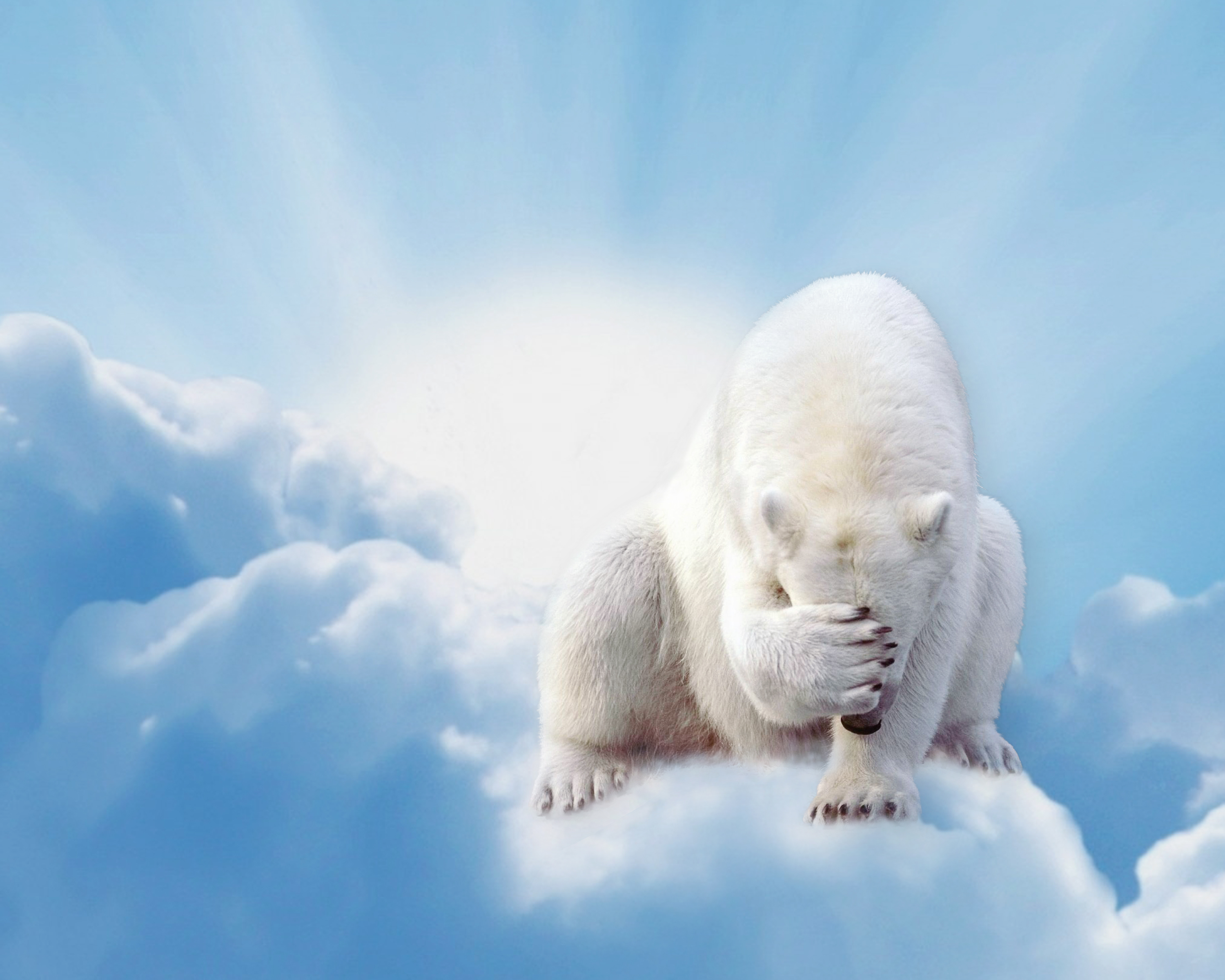 CENERINI Cessation (Polar Bear) 2014.jpg