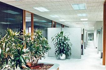 Commercial Interior Design, office interior, glass walls, wood trim, gray commercial carpet, plants in office, gray cubicles,