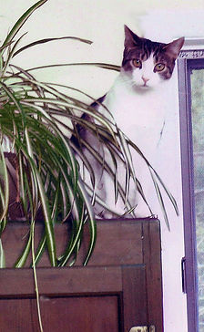 Miss Kitty and Plant.jpeg