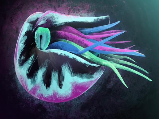 3D+2D Nautilus