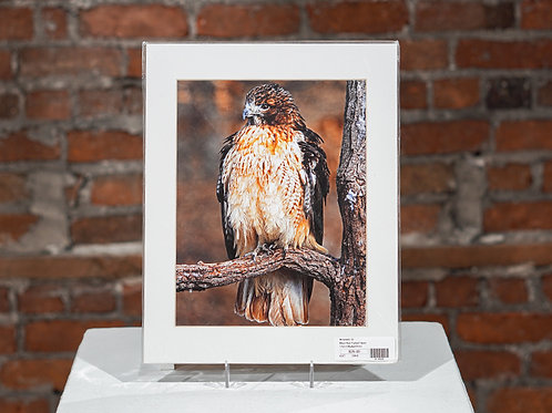 """""""Red Tailed Hawk"""""""
