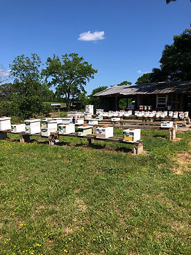North Georgia Bee Farm Queen Yard