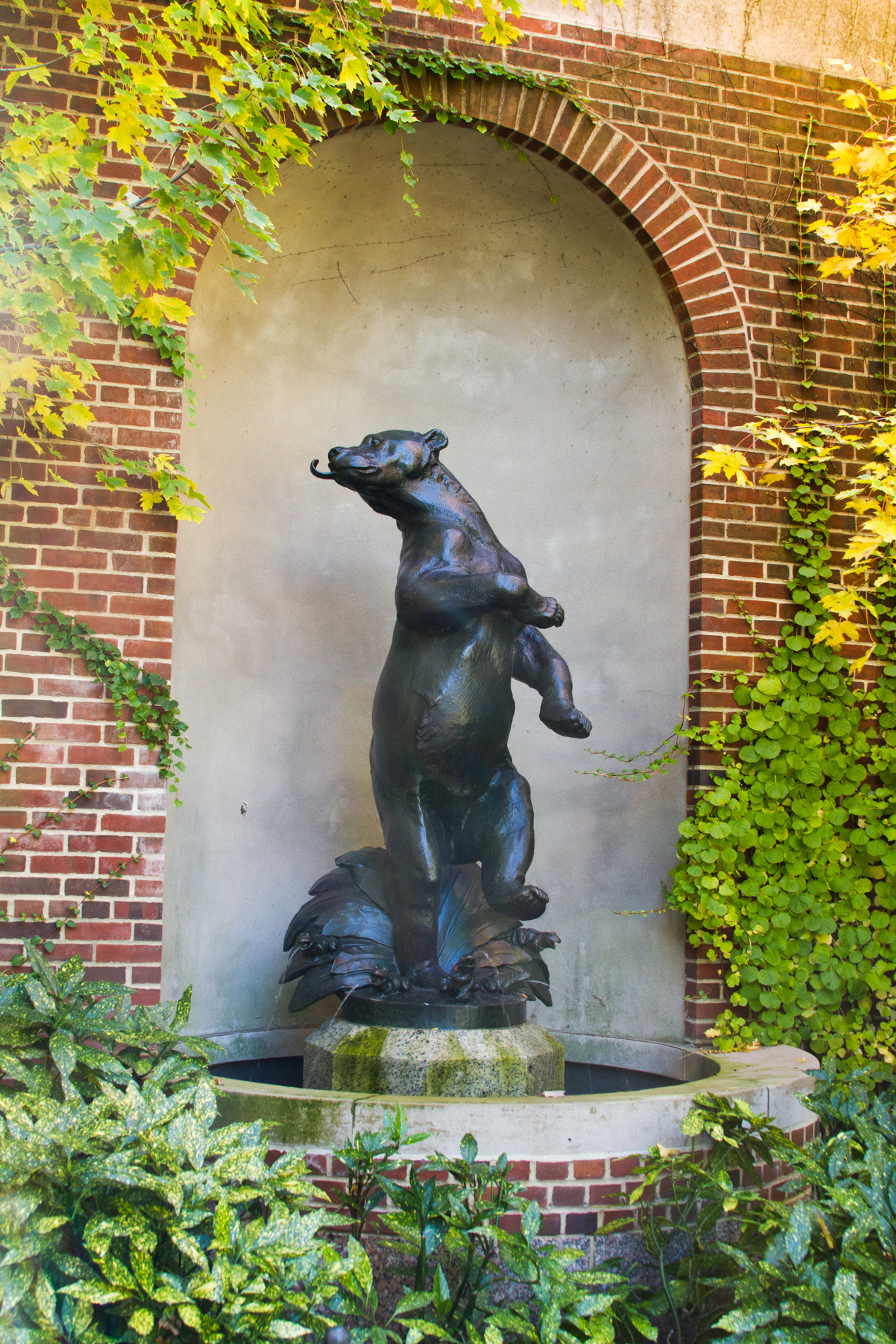 Honey Bear [1809]