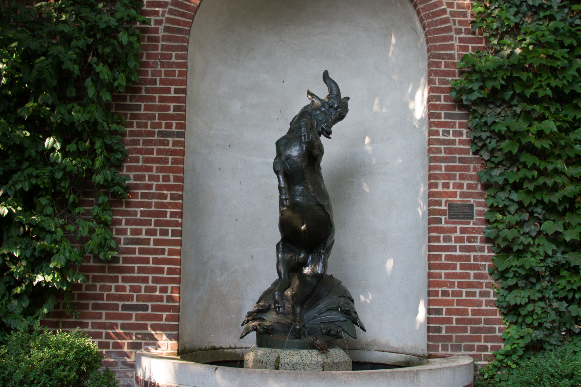 Dancing Goat [1801]