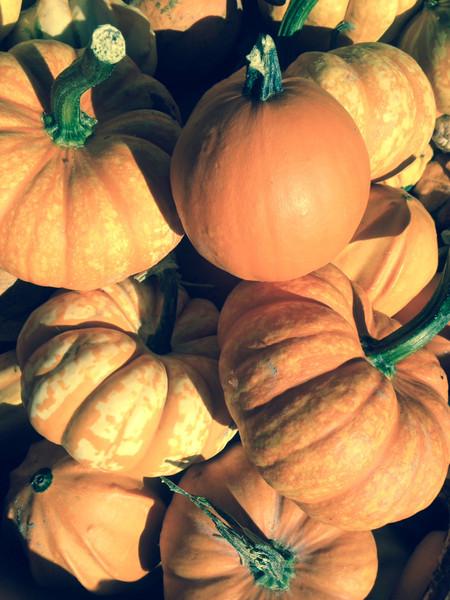 Miniature Pumpkins for Decorating