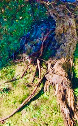 roots for website.jpeg