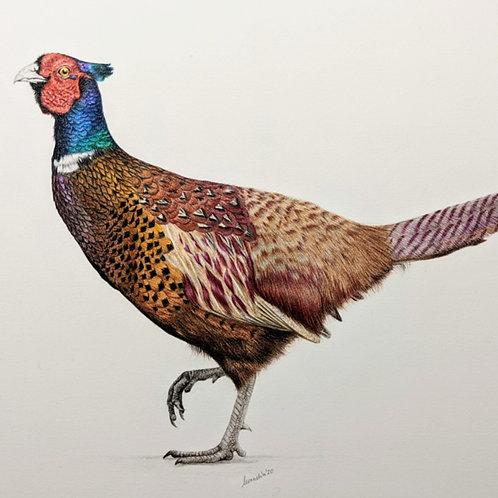 Silly Chicken Original Drawing