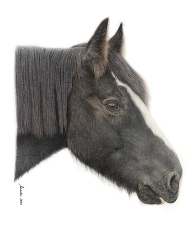 horse-correction-proof%20(1)_edited.jpg