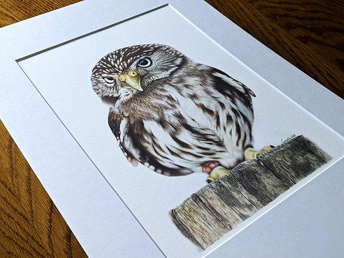 Little Owl A4+ Giclée Print