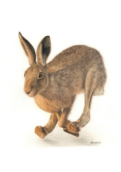 First catch your hare.jpg