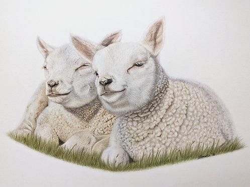 Spring Lambs Original Drawing