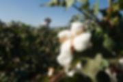 Nudie-jeans-organic-cotton.jpg