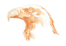 Indigofera-California-Hiking-Series-eagle