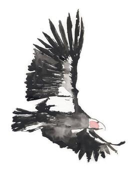 Indigofera-California-Hiking-Series-condor