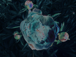 floral compass.png