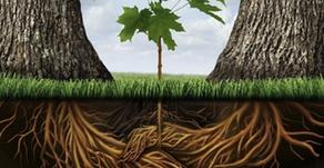 Veranderen? Denk eens als de bomen...