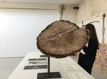 Exhibition raising awareness about the issue of human-non-human relationships, and questioning the perception of plants, and proposing a posthuman perspective. Jordaan, Amsterdam, NL.