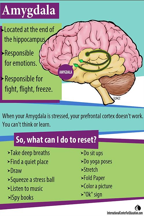 Applied Educational Neuroscience Brain Poster