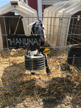 What to Expect…Calves in the First Year Part 1