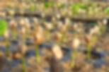 05_nursery_P1020451.JPG