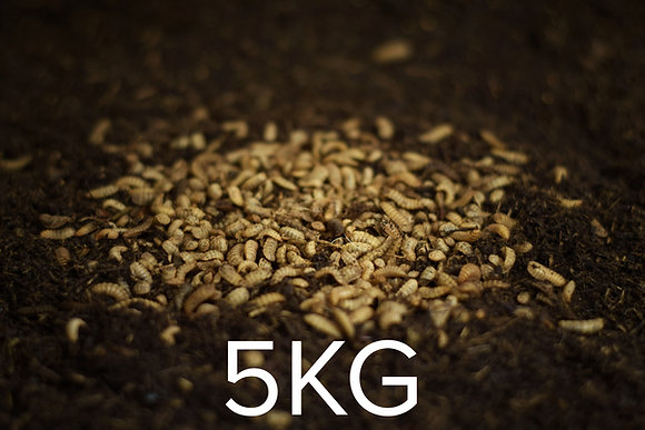 5kg Live Larvae (Feedstock)