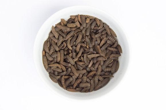 Live Larvae (Breeding Stock)
