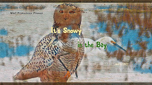 snowycover.jpg