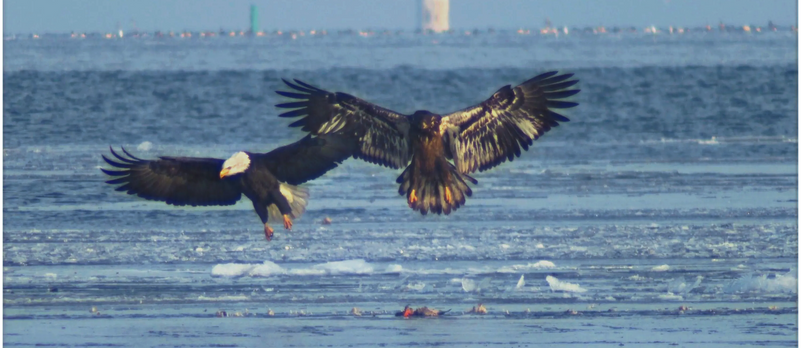 Eagles A