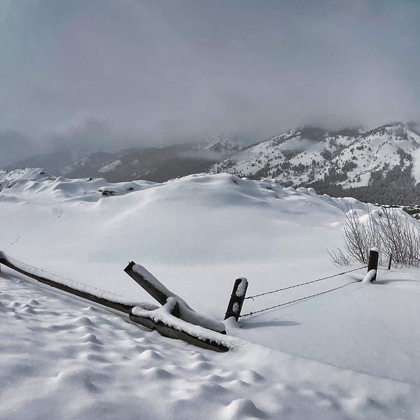 Fenced Snow Meadow Jackson Hole