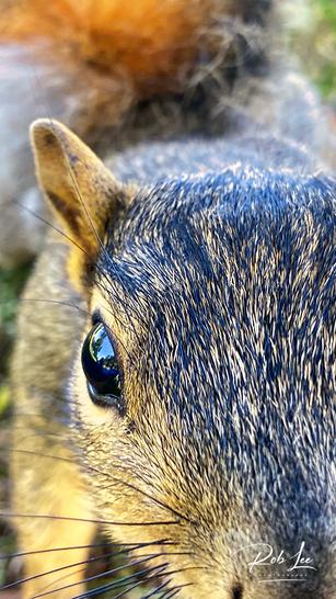 Inquisitive Visitor
